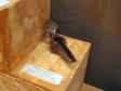 """Museum of history of Naberezhnye Chelny. Экспозиция """"Археология. Волжская Булгария"""". Поливной светильник, 14 в."""