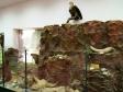 """Музей истории города Набережные Челны. Экспозиция """"Палеонтология. Животный мир Прикамья""""."""