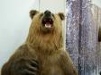 """Museum of history of Naberezhnye Chelny. Экспозиция """"Палеонтология. Животный мир Прикамья"""". Чучело медведя."""