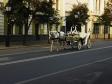 Казань. Грустная лошадь По городу шла. Грузную ношу Печально несла. (Николай Пастыр)