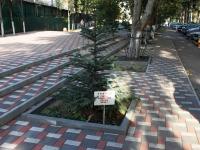 Туапсе, улица Маршала Жукова. Аллея городов-героев