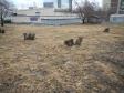 Екатеринбург, Tkachey str., 8: детская площадка возле дома